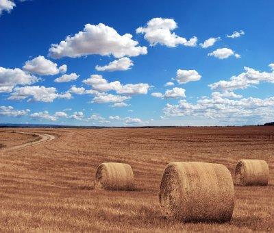 Ako veľký je problém Spoločnej poľnohospodárskej politiky?