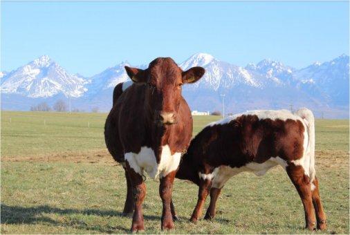 Slovenské poľnohospodárstvo potrebuje viac ako len