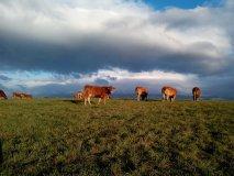 Tlačová správa: Pozemkové úpravy sú šancou na skutočnú reformu