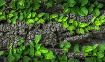 O zelenej ekonomike buďme úprimní