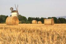 Veľké vs. malé – ktoré farmy treba podporovať?